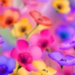 Lectia 9: Citeste dacă vrei să nu-ti strici relatia cu culorile
